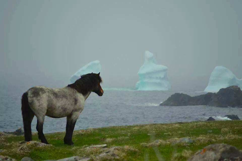 Horse and icebergs